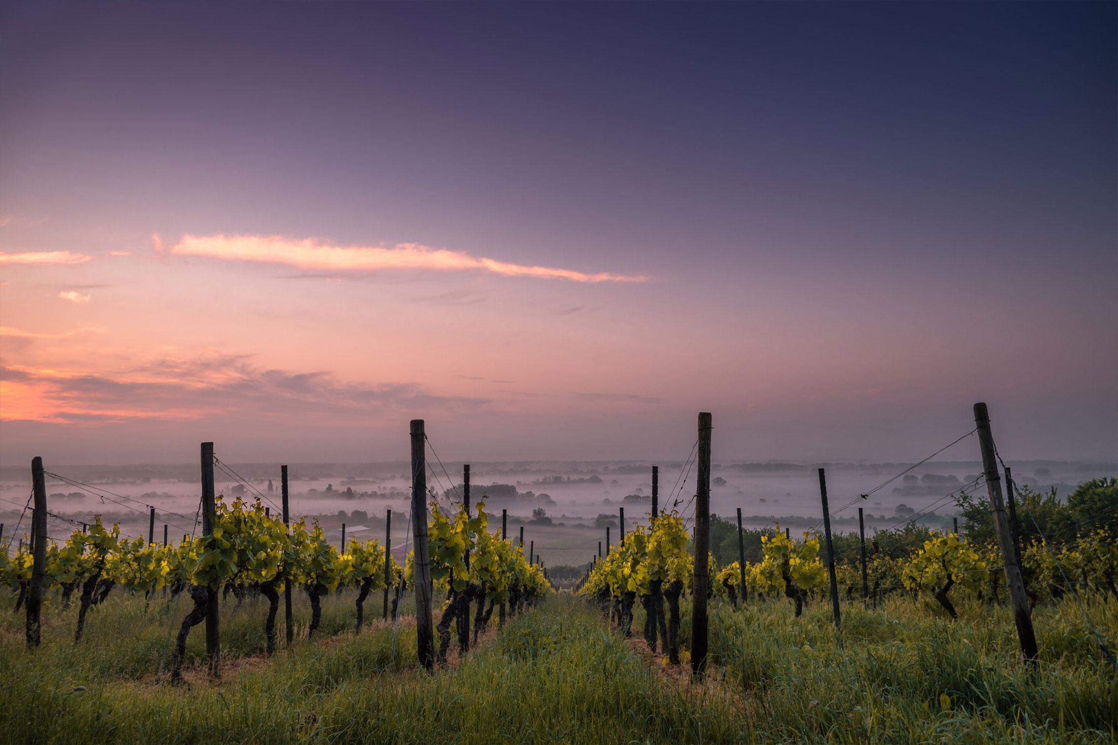 twilight at vineyard with fog in the distance, vineyard at dusk, flextank vineyard