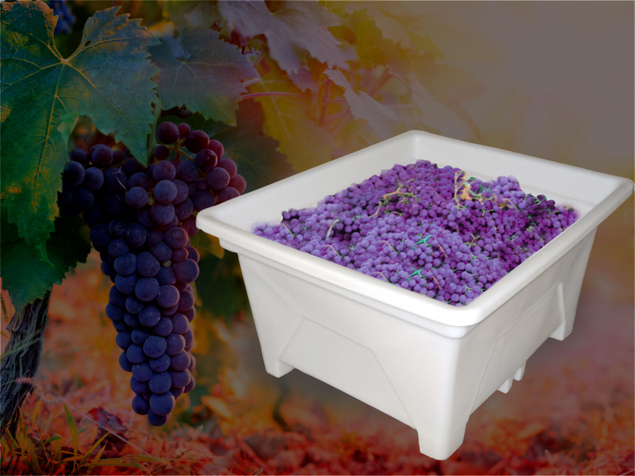grape picking bin, bin full of grapes, plastic bin with grapes in it, supatuff bin, stackable harvesting bins